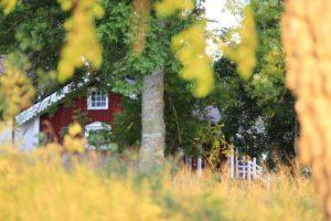 Cabane insolite dans son jardin